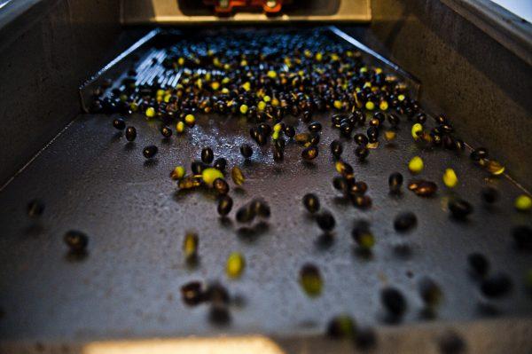 les olives de l'huile Essenza di Carma à la boutique renneaise Les Bonnes Pâtes