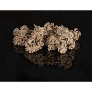 Ces likenn aus cèpes sont élaborées en Bretagne par le meunier artisan David Le Ruyet et se trouvent à Rennes dans la boutique Les Bonnes Pâtes.